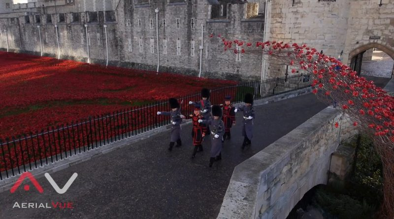 Tower of London Covered In Poppies